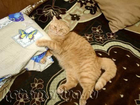 В обнимку с подушкой