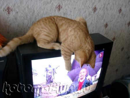 смотрим телевизор (watch TV)