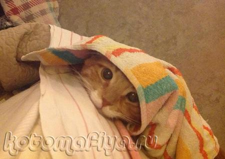 Не трогайте меня, я спрятался!