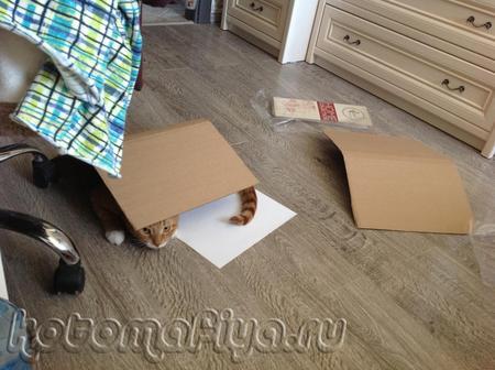 Любимая игрушка кошек- это коробка!