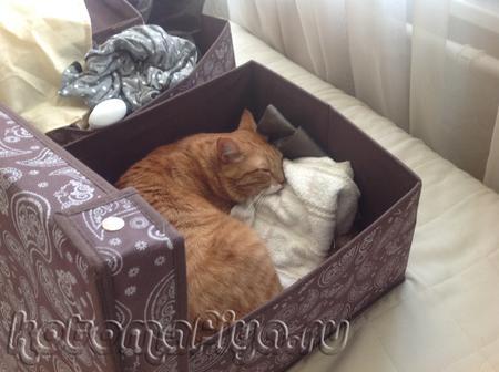 Спать в коробках-любимое занятие