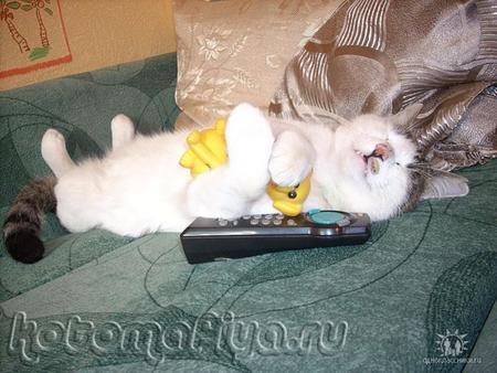 Спят усталые игрушки, кошки спят...
