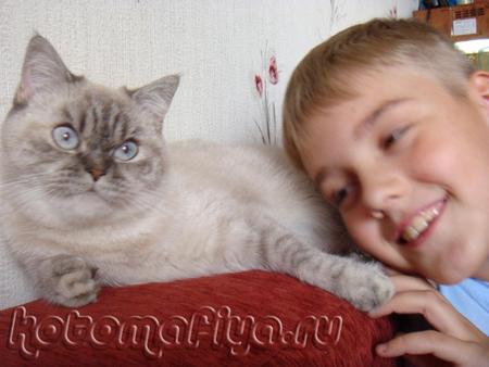 Опять эти кошачьи нежности)))