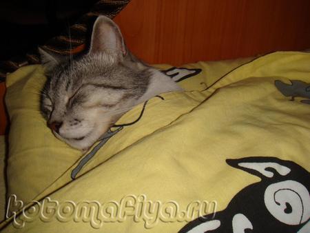 Личная постель Лео