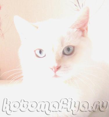 Беня-очень красивый кот