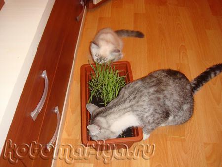 А говорят коты - мясоеды))