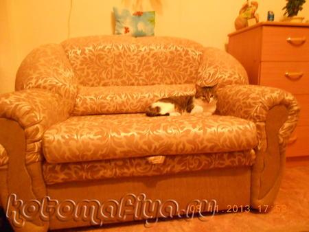 Барсик на кресле