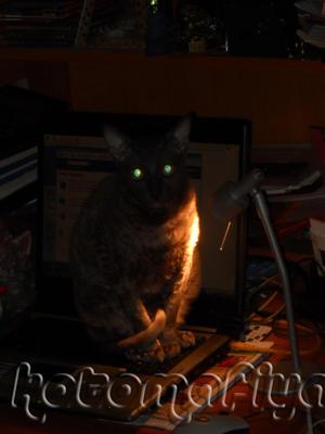 Ноутбучная кошка! Долой кнопки на клавиатуре!