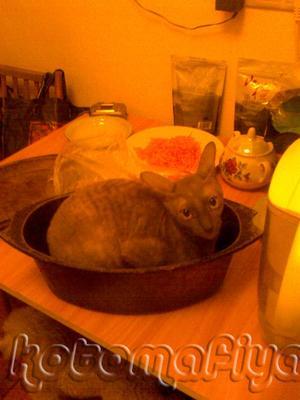 Вы не любите кошек? вы их просто не умеете готовить!!!!
