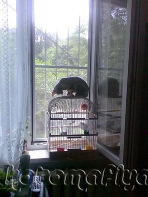 Птицы, я вас вижу, ау!!!!