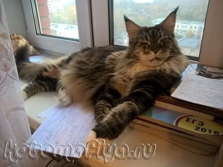 лежу, в окно гляжу)))