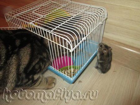 Да вот беда, кот подрос, а привычка отдыхать в клетке осталась.....