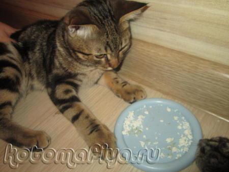 Кекс не жадный и всегда с наслаждением наблюдает, как Белка лакомится из его миски.