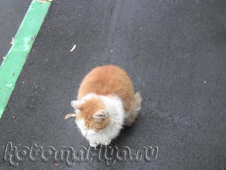 Рыжий кот, выброшен на улицу
