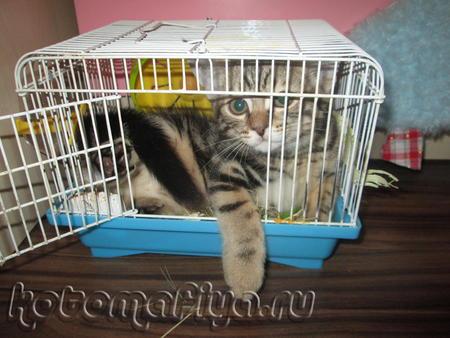 Любимое место Кекса - это клетка его подруги, хомячки Белки. Пока та прогуливается по квартире, кот незамедлительно занимает ее домик.