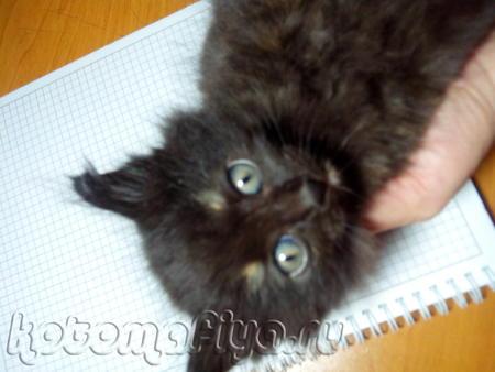 У наша кошечка окатилась)))у нее появились 3 очаровательных котят