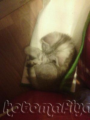 Снежана-малышка спит