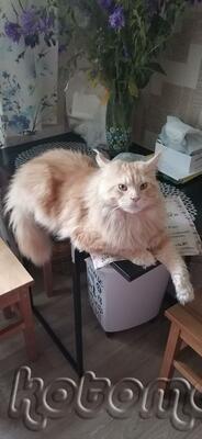 Ну очень любит лежать на столе...