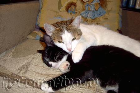 Кошачья любовь.. некоторым людям поучиться бы..