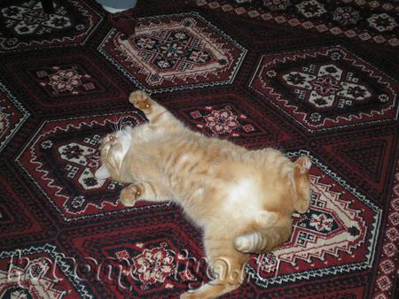 Рыжий Котик Персик - Рыжее Счастье