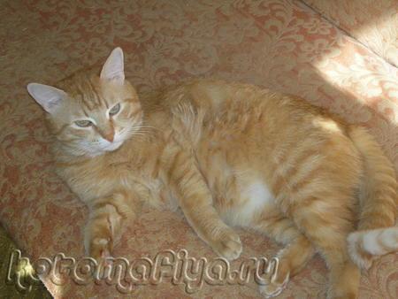 Рыжий Котик Персик