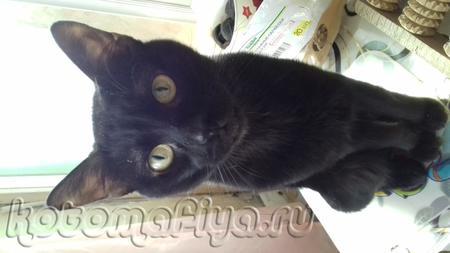 Отдадим в очень добрую семью некачтрированного котика в загородный дом что бы жил на природе и знал что у него есть дом где его накормят и бкдут хорошо относться