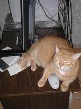 Рыжий Котик Персик - После работы